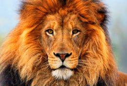 Simhasana e il respiro del leone
