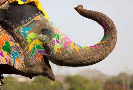 I sei ragazzi e l'elefante